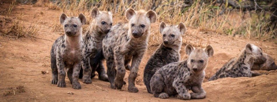 Makalali Private Game Reserve Kruger South Africa