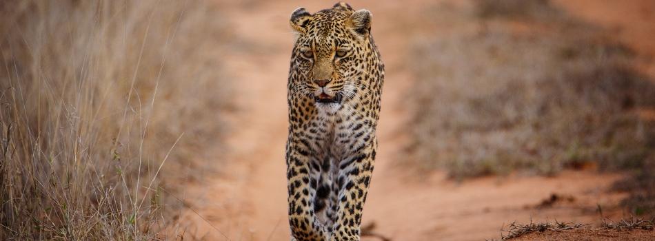 Sabi Sands Game Reserve Kruger South Africa