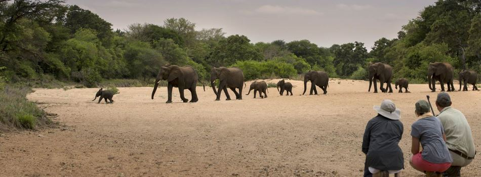 Timbavati Private Game Reserve Kruger South Africa