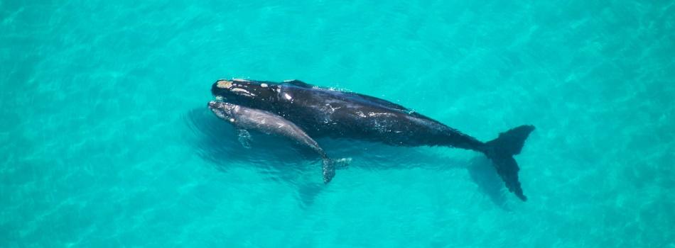 Whale Coast South Africa